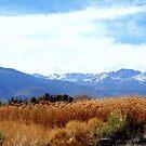 """""""High Sierras"""" by Lynn Bawden"""
