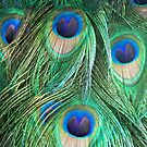 Peacock Feathers by schiabor