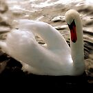 Delightful Wings by Brian Bo Mei