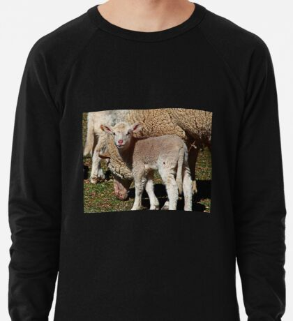 Kleines Lamm Leichtes Sweatshirt