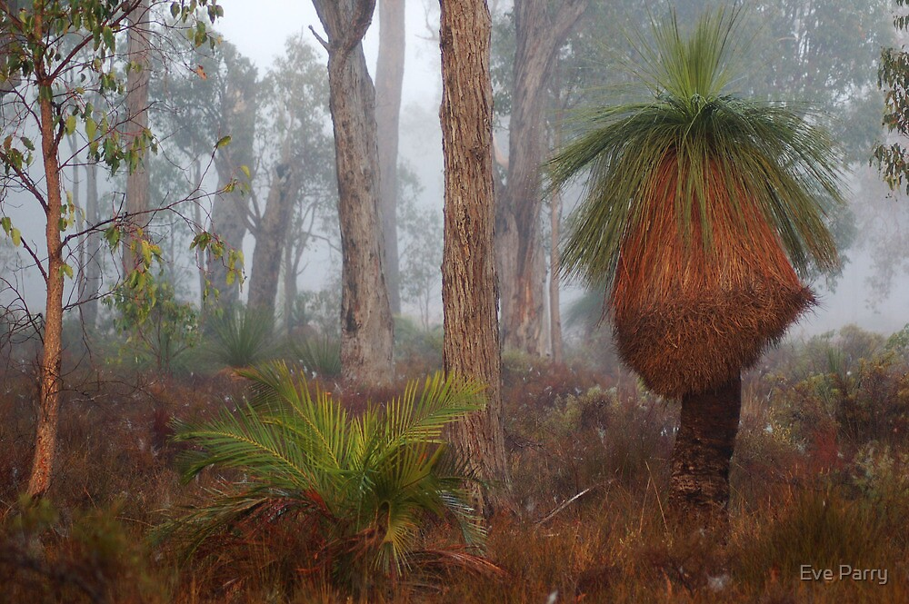Fog In Frankland Bush by Eve Parry