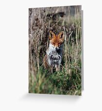 Fox in grass Greeting Card