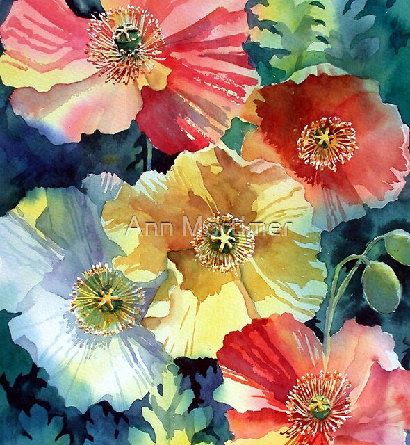 Iceland Poppies by Ann Mortimer
