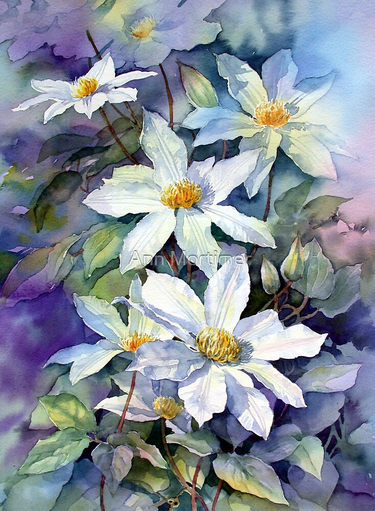 May Morning Clematis by Ann Mortimer