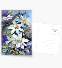 May Morning Clematis Postcards
