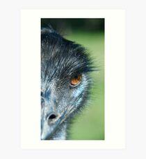 Emu Dude in Whiteman Park Art Print