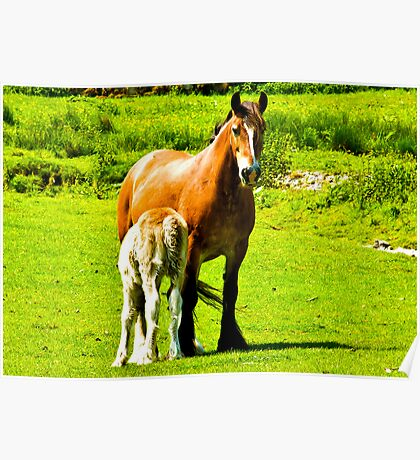 Mother & Foal Poster