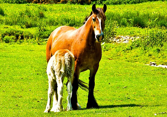 Mother & Foal by Trevor Kersley
