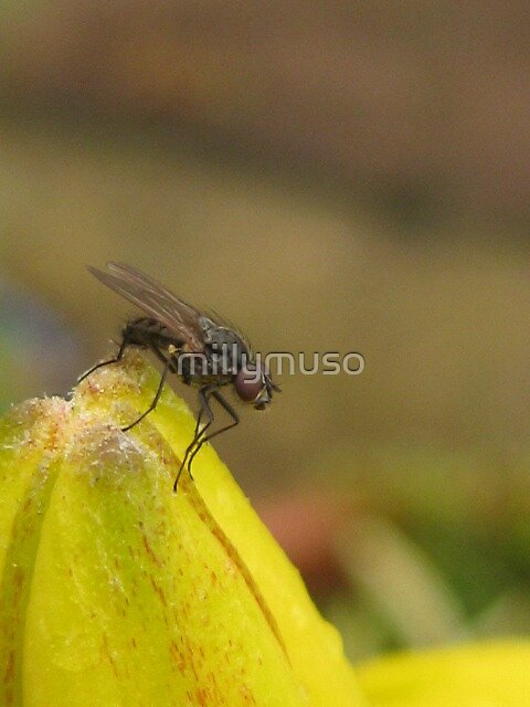 fly bud by millymuso