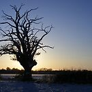 Sunset Silhouette by Paul Hickson