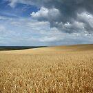 North Norfolk Landscape by FraserJ