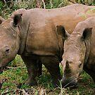 Endangered Rhino by Alexa Pereira