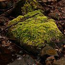 moss by canonsnapa