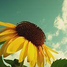 Flower of the sun by jussta