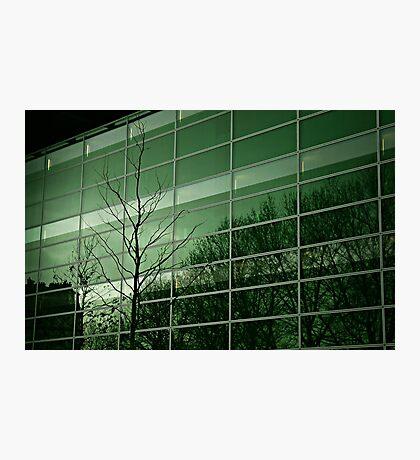Arbre et facade Photographic Print