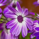 Purple Droplets by Dave Hare