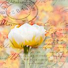 Love Letter on Yellow and White Subtle Flowers by Phototrinity