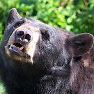 Bored Bear by Lolabud