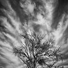 Trees-2 by Craig Hender