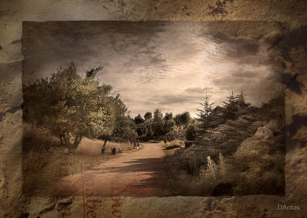 Memories Fade - Intimate by Danuta Antas