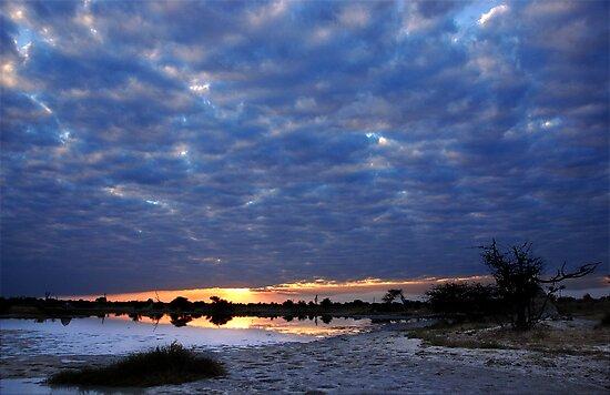 Blue sunset - Okavango Delta, Botswana by Sharon Bishop