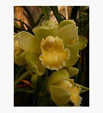 Season 2010 - Orchid 2 Photographic Print