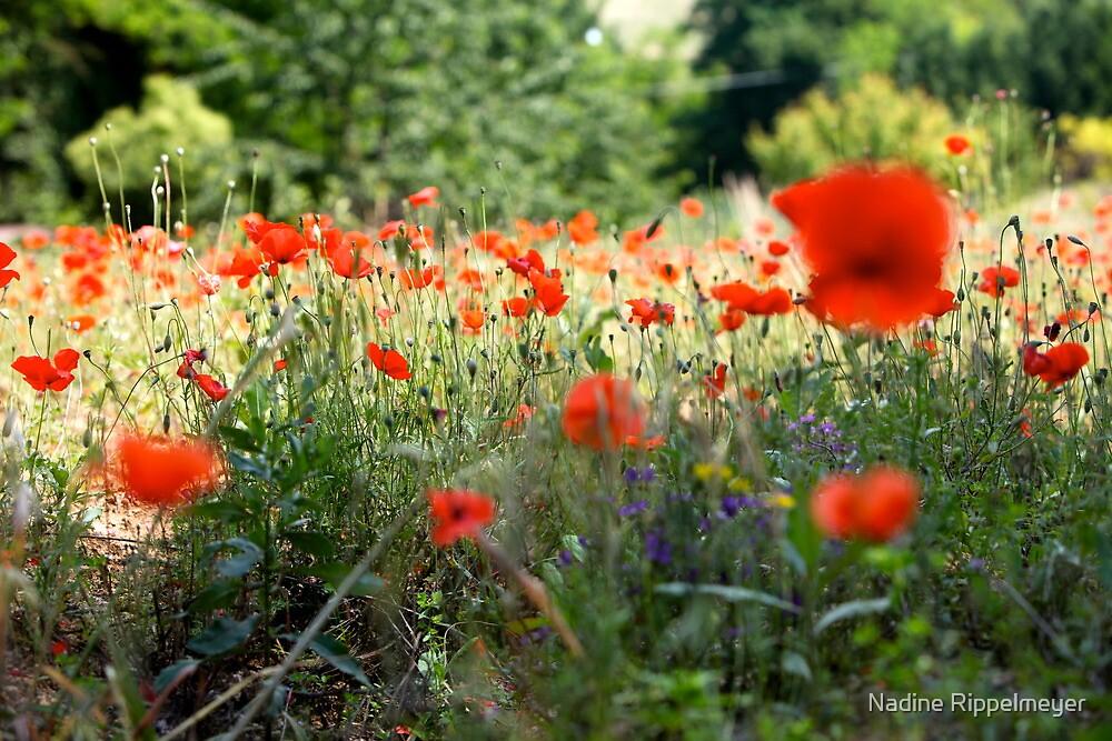 Tuscany Poppies by Nadine Rippelmeyer