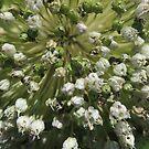 Leek in flower - macro by AbsintheFairy