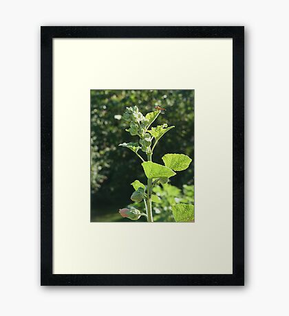 Sitting on Top of the Hock Framed Print