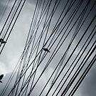 Sky cables by laurentlesax