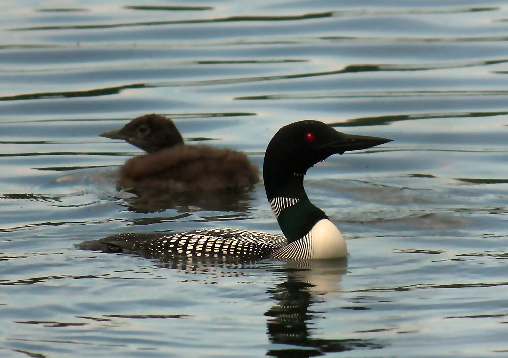 Common Loon and Chick by by Marvil LaCroix