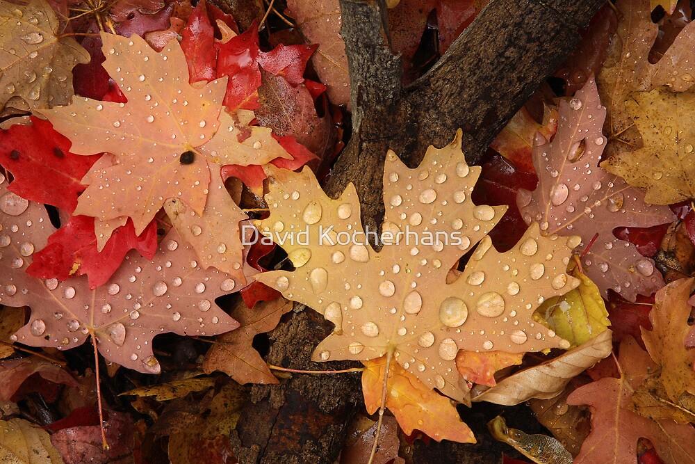 Fallen Maple Leaves by David Kocherhans