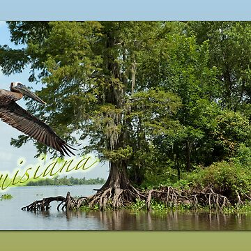 Louisiana Postcard by Miracles