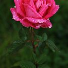 Jewelled Rose by Tisa
