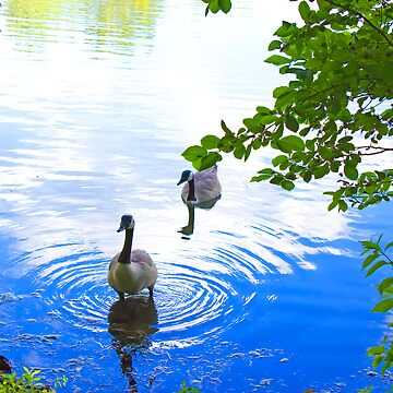 Geese by qbranchltd
