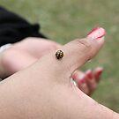 Ladybug... by GoldZilla