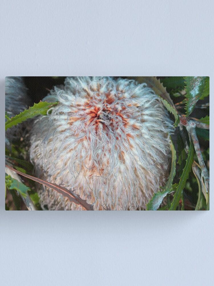 Alternate view of Banksia baueri Canvas Print
