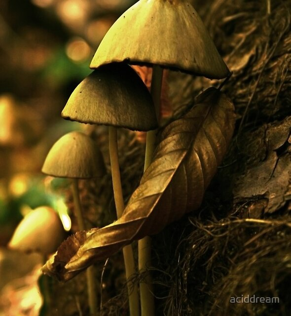 Shrooms by aciddream