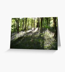 Tyle Coch Woods. Greeting Card
