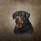 Zeichnung Hund Rottweiler von bonidog