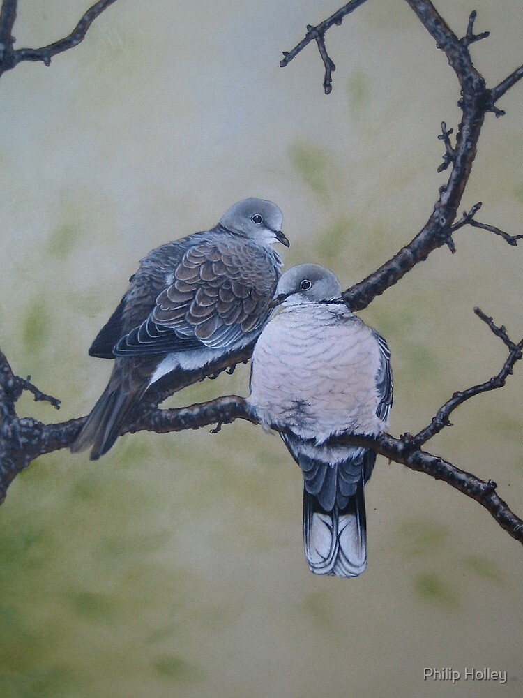 Collared Doves by Philip Holley