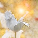 Romantic Tulip Love Letter - Dance of the Tulip Fairy by Phototrinity