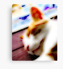 Jasper In Repose Canvas Print