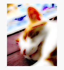 Jasper In Repose Photographic Print
