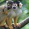 Mums & Babies (Mammals ONLY)