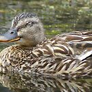 forty winks - quack! by monkeyferret