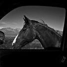 Visiting Horse by socalgirl