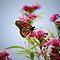 Beautiful Birds & Butterflies