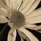 Reaching Out  (Sepia) by Terri~Lynn Bealle