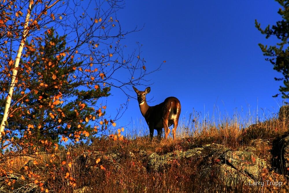 On The Ridge!!! by Larry Trupp